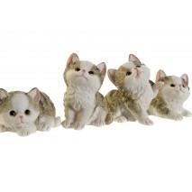 Chats et châtons (au choix)