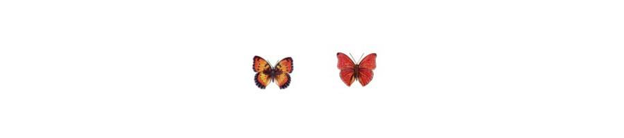 Décor Papillons