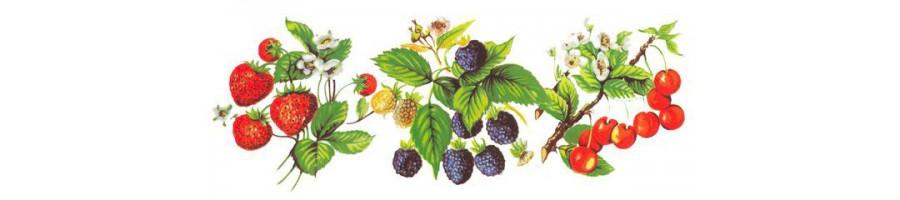 Différentes tailles de bols avec des fruits