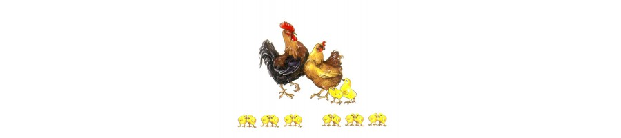 Poules, coq, oie et canard