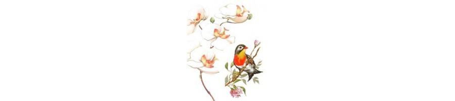 Décors Orchidée claire et oiseaux